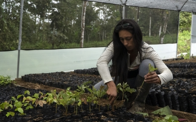 Restoring and Reforesting in Community