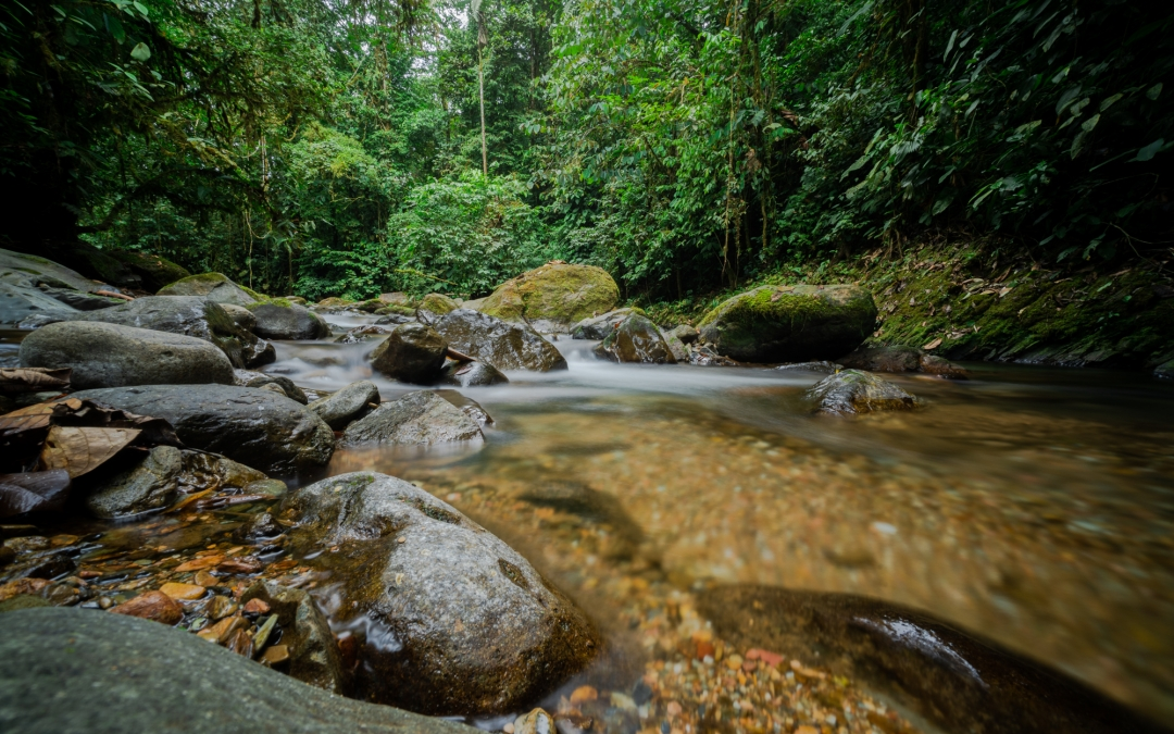 Our forests: a treasure trove for our future