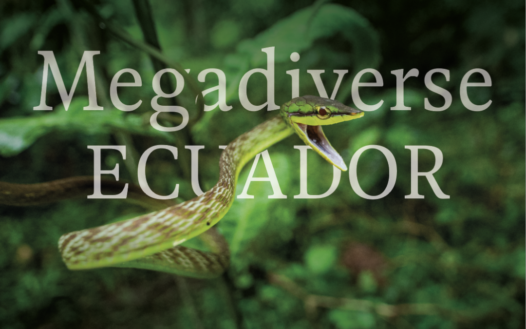 Biodiversity in the Andean Chocó: Quito's forests